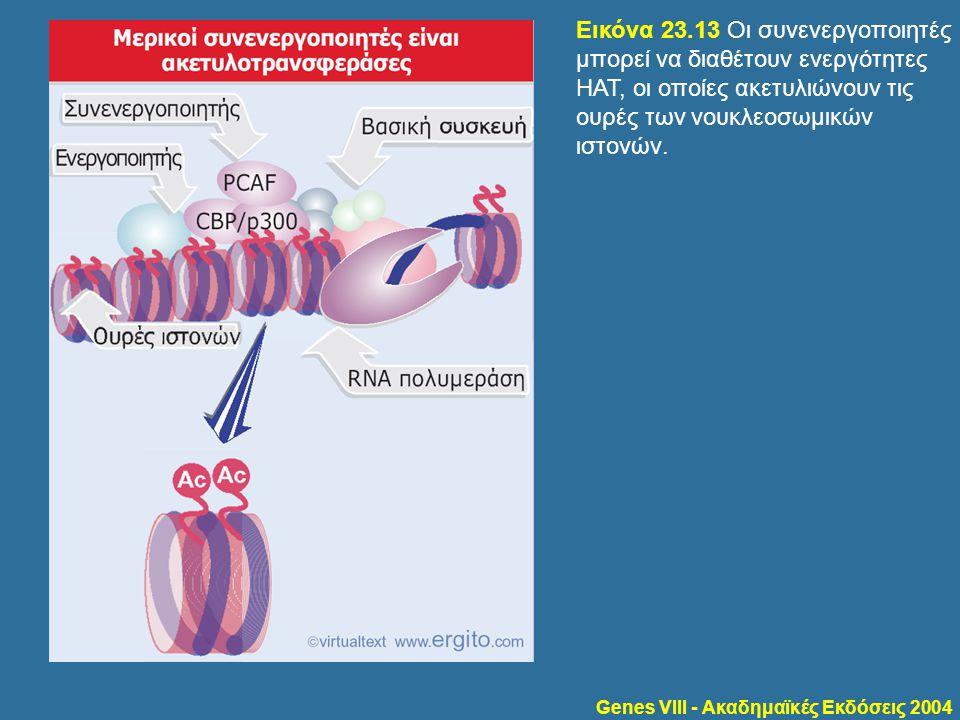 Genes VIII - Ακαδημαϊκές Εκδόσεις 2004 Εικόνα 23.13 Οι συνενεργοποιητές μπορεί να διαθέτουν ενεργότητες HAT, οι οποίες ακετυλιώνουν τις ουρές των νουκ
