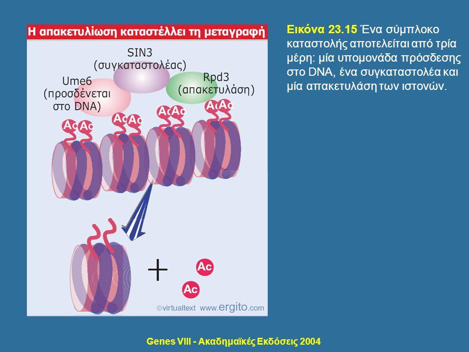 Genes VIII - Ακαδημαϊκές Εκδόσεις 2004 Εικόνα 23.15 Ένα σύμπλοκο καταστολής αποτελείται από τρία μέρη: μία υπομονάδα πρόσδεσης στο DNA, ένα συγκαταστο