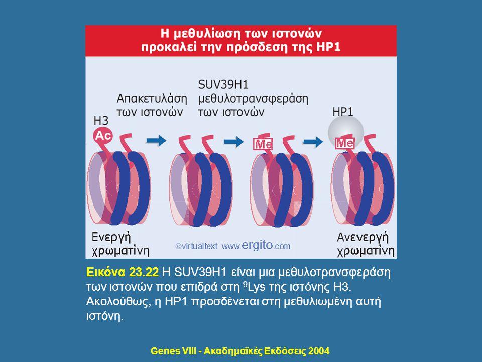 Genes VIII - Ακαδημαϊκές Εκδόσεις 2004 Εικόνα 23.22 Η SUV39H1 είναι μια μεθυλοτρανσφεράση των ιστονών που επιδρά στη 9 Lys της ιστόνης H3. Ακολούθως,