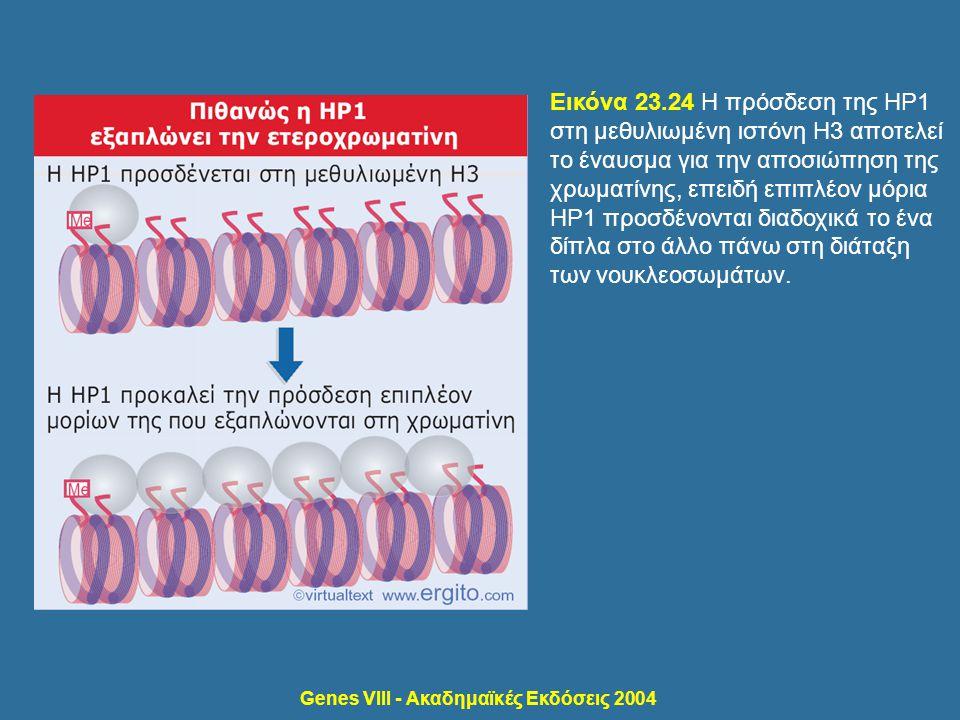 Genes VIII - Ακαδημαϊκές Εκδόσεις 2004 Εικόνα 23.24 Η πρόσδεση της HP1 στη μεθυλιωμένη ιστόνη H3 αποτελεί το έναυσμα για την αποσιώπηση της χρωματίνης