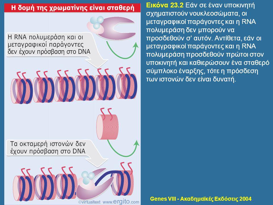 Genes VIII - Ακαδημαϊκές Εκδόσεις 2004 Εικόνα 23.2 Εάν σε έναν υποκινητή σχηματιστούν νουκλεοσώματα, οι μεταγραφικοί παράγοντες και η RNA πολυμεράση δ