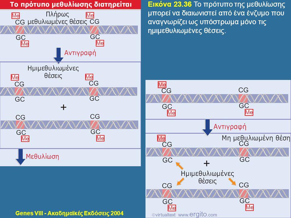 Genes VIII - Ακαδημαϊκές Εκδόσεις 2004 Εικόνα 23.36 Το πρότυπο της μεθυλίωσης μπορεί να διαιωνιστεί από ένα ένζυμο που αναγνωρίζει ως υπόστρωμα μόνο τ