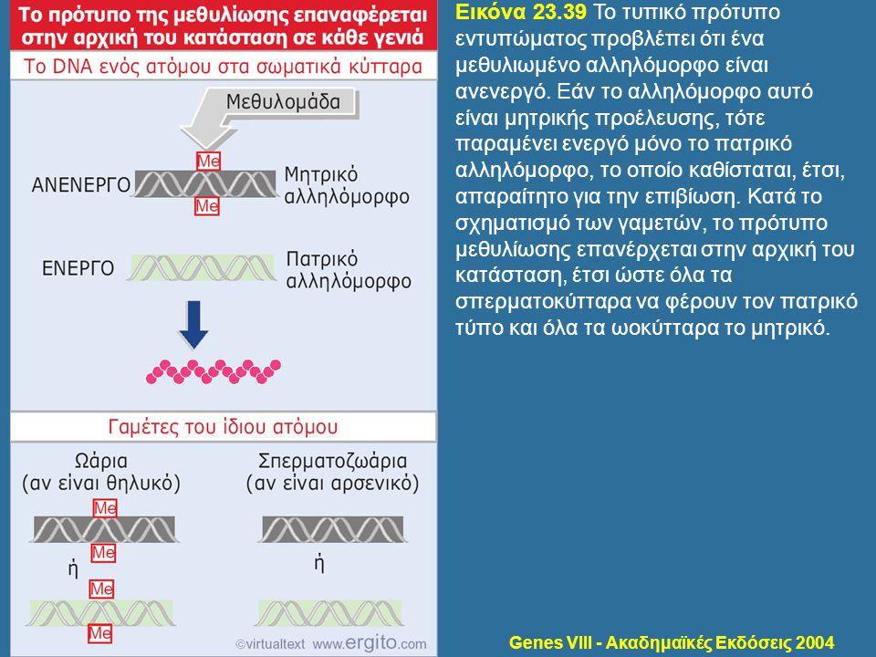 Genes VIII - Ακαδημαϊκές Εκδόσεις 2004 Εικόνα 23.39 Το τυπικό πρότυπο εντυπώματος προβλέπει ότι ένα μεθυλιωμένο αλληλόμορφο είναι ανενεργό. Εάν το αλλ