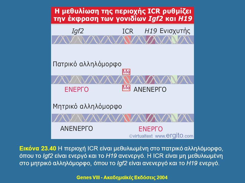 Genes VIII - Ακαδημαϊκές Εκδόσεις 2004 Εικόνα 23.40 Η περιοχή ICR είναι μεθυλιωμένη στο πατρικό αλληλόμορφο, όπου το Igf2 είναι ενεργό και το H19 ανεν
