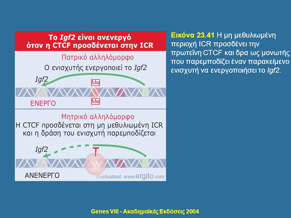 Genes VIII - Ακαδημαϊκές Εκδόσεις 2004 Εικόνα 23.41 Η μη μεθυλιωμένη περιοχή ICR προσδένει την πρωτεΐνη CTCF και δρα ως μονωτής που παρεμποδίζει έναν