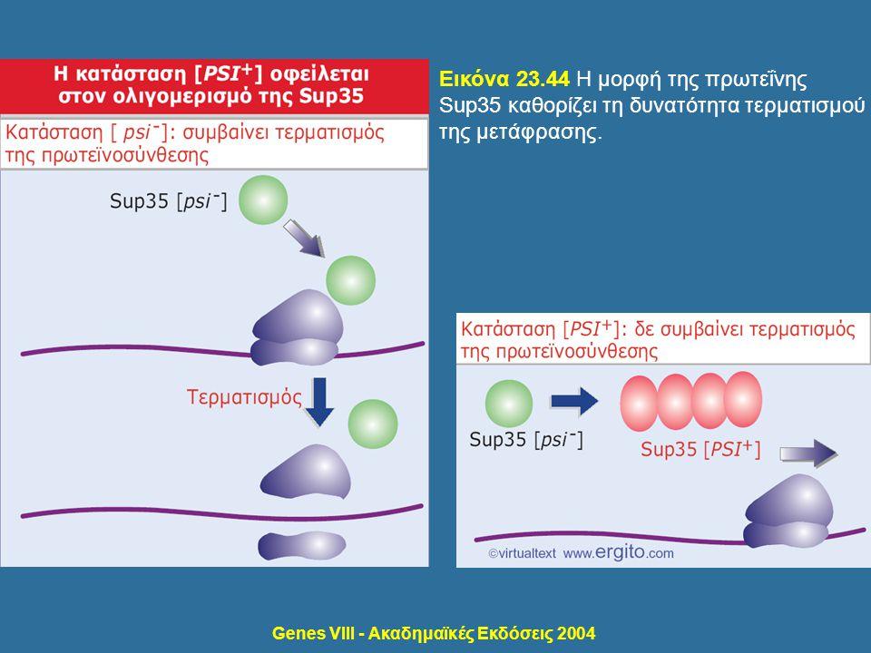 Genes VIII - Ακαδημαϊκές Εκδόσεις 2004 Εικόνα 23.44 Η μορφή της πρωτεΐνης Sup35 καθορίζει τη δυνατότητα τερματισμού της μετάφρασης.
