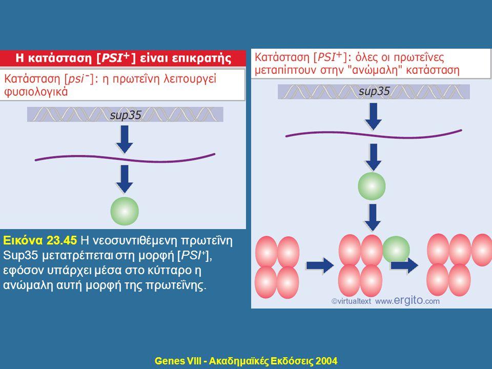 Genes VIII - Ακαδημαϊκές Εκδόσεις 2004 Εικόνα 23.45 Η νεοσυντιθέμενη πρωτεΐνη Sup35 μετατρέπεται στη μορφή [PSI + ], εφόσον υπάρχει μέσα στο κύτταρο η