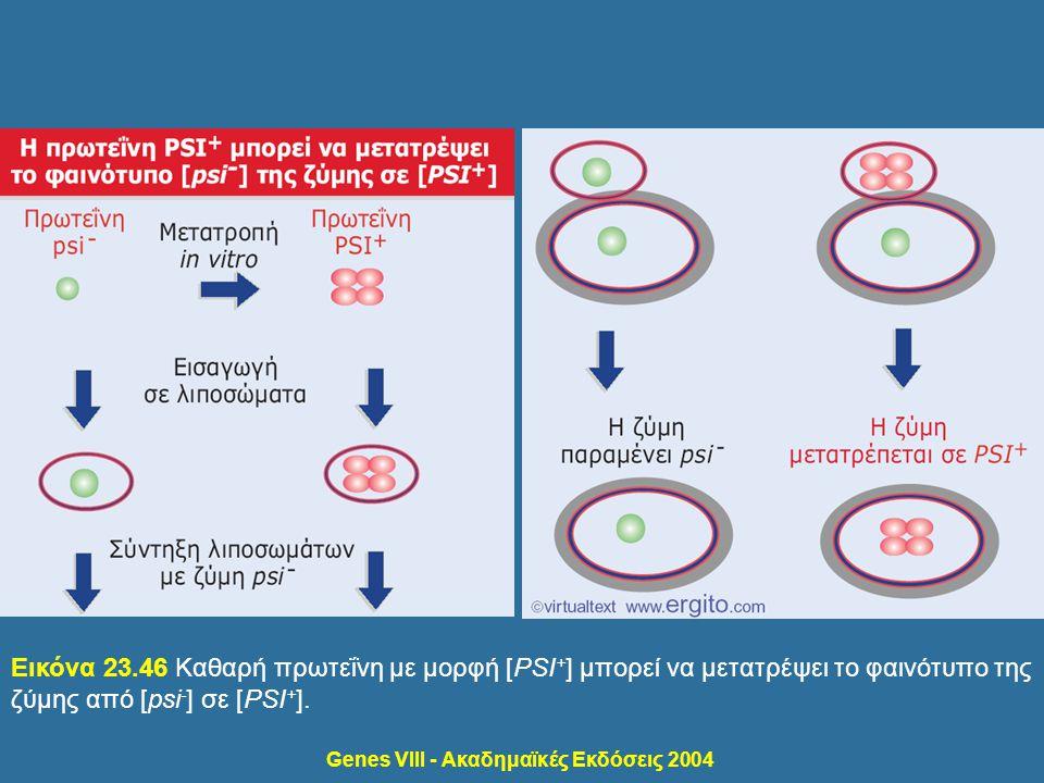 Genes VIII - Ακαδημαϊκές Εκδόσεις 2004 Εικόνα 23.46 Καθαρή πρωτεΐνη με μορφή [PSI + ] μπορεί να μετατρέψει το φαινότυπο της ζύμης από [psi - ] σε [PSI