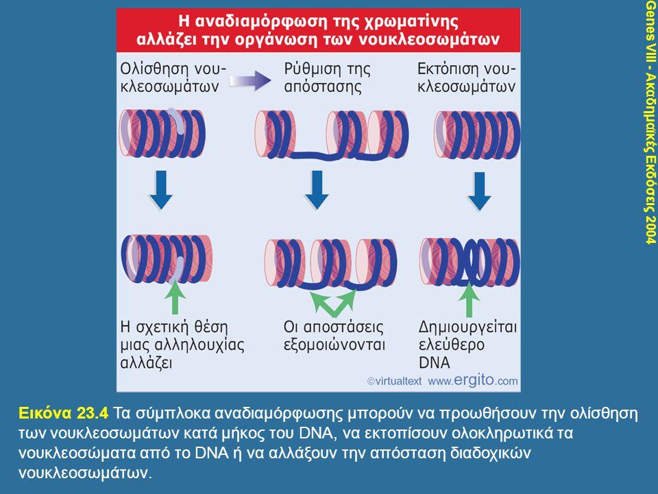 Genes VIII - Ακαδημαϊκές Εκδόσεις 2004 Εικόνα 23.4 Τα σύμπλοκα αναδιαμόρφωσης μπορούν να προωθήσουν την ολίσθηση των νουκλεοσωμάτων κατά μήκος του DNA
