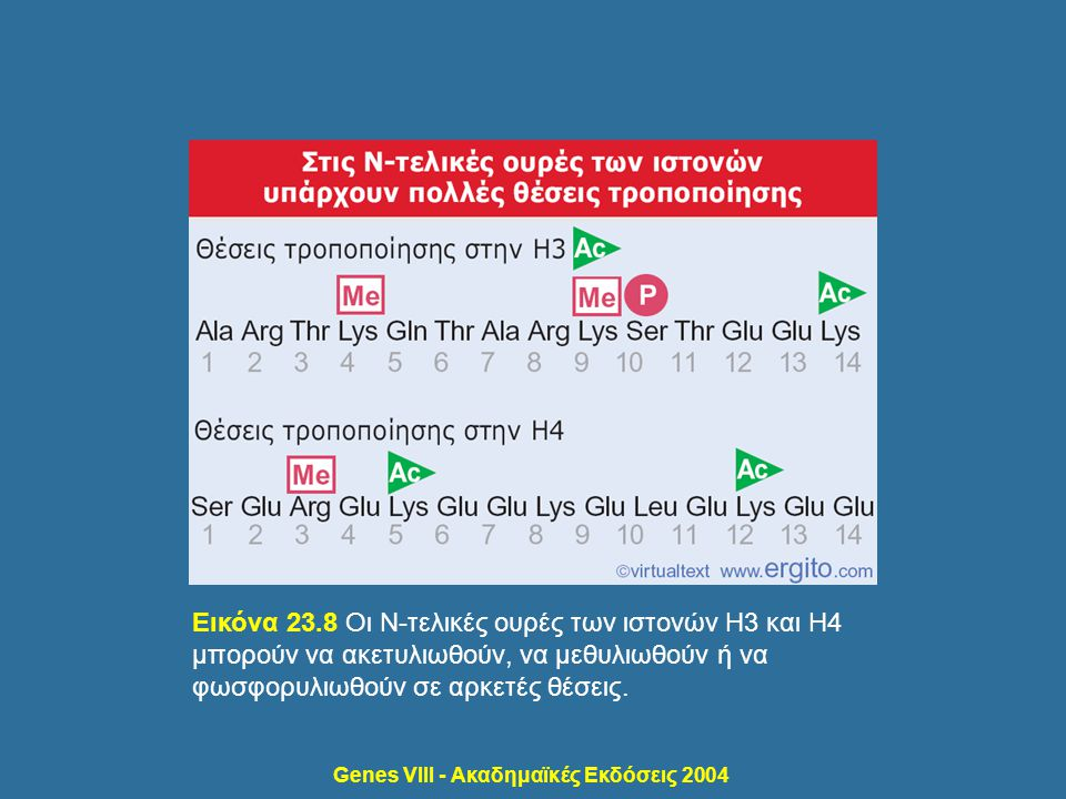 Genes VIII - Ακαδημαϊκές Εκδόσεις 2004 Εικόνα 23.8 Οι Ν-τελικές ουρές των ιστονών H3 και H4 μπορούν να ακετυλιωθούν, να μεθυλιωθούν ή να φωσφορυλιωθού