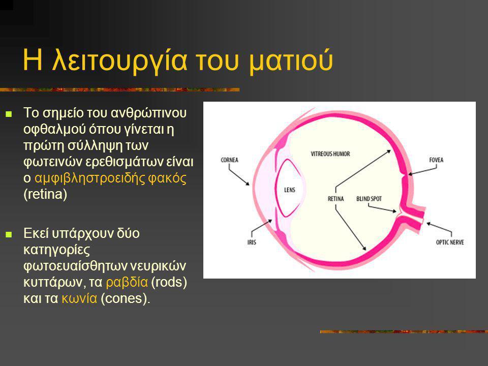 Η λειτουργία του ματιού  Το σημείο του ανθρώπινου οφθαλμού όπου γίνεται η πρώτη σύλληψη των φωτεινών ερεθισμάτων είναι ο αμφιβληστροειδής φακός (reti
