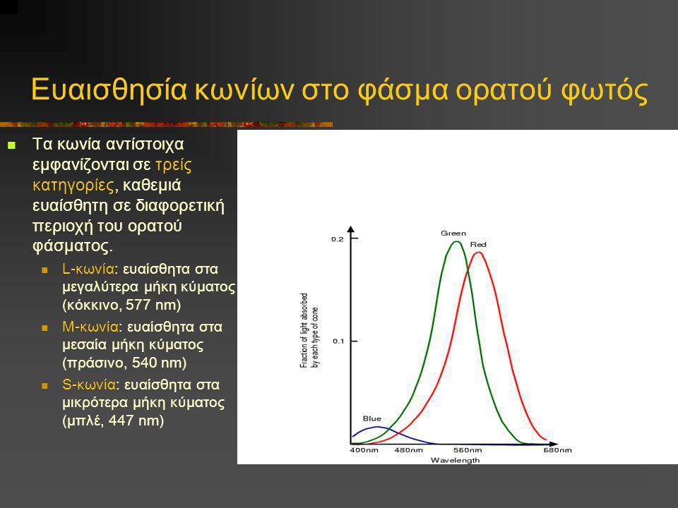 Ευαισθησία κωνίων στο φάσμα ορατού φωτός  Τα κωνία αντίστοιχα εμφανίζονται σε τρείς κατηγορίες, καθεμιά ευαίσθητη σε διαφορετική περιοχή του ορατού φ