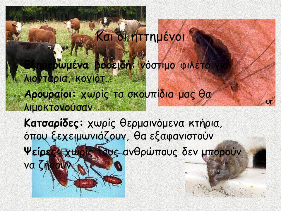 Και οι ηττημένοι Εξημερωμένα βοοειδή: νόστιμο φιλέτο για λιοντάρια, κογιότ… Αρουραίοι: χωρίς τα σκουπίδια μας θα λιμοκτονούσαν Κατσαρίδες: χωρίς θερμαινόμενα κτήρια, όπου ξεχειμωνιάζουν, θα εξαφανιστούν Ψείρες: χωρίς τους ανθρώπους δεν μπορούν να ζήσουν
