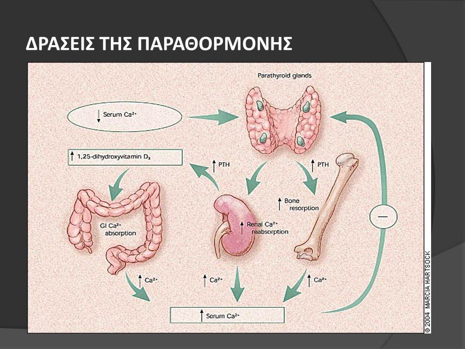 ΠΡΩΤΟΠΑΘΗΣ ΥΠΕΡΠΑΡΑΘΥΡΕΟΕΙΔΙΣΜΟΣ- ΔΙΑΓΝΩΣΗ  [Ca 2+ ] και iPTH  Διάγνωση με το βιοχημικό έλεγχο  Θειαζιδικά διουρητικά και λίθιο πρέπει να διακόπτονται  Ρ στα κατώτερα φυσιολογικά όρια ή χαμηλός  Αυξημένη αλκαλική φωσφατάση  Απεικονιστικός έλεγχος των παραθυρεοειδών, μέτρηση 1,25OHD και οστικής μάζας δεν είναι απαραίτητες στη διάγνωση Trends Endocrinol Metab 1990;1:243-247