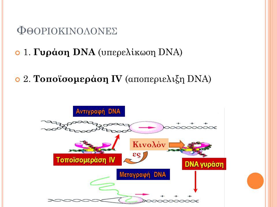 Τ ΕΤΡΑΚΥΚΛΙΝΕΣ Σύνδεση με 30S ριβοσωμική υπομονάδα Παρεμπόδιση πρόσδεσης αμινο- ακυλο-tRNA στο σύμπλεγμα mRNA- ριβόσωμα