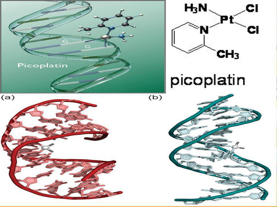 Φωτοσύνθεση Φωτοσύστημα ΙΙ  και πάλι η χημική σύνθεση των απαραίτητων οργανικών μορίων της φωτοσύνθεσης, γίνεται χάρη στην ύπαρξη του συμπλόκου (πλειάδας) Mn 4 O 4 Ca.