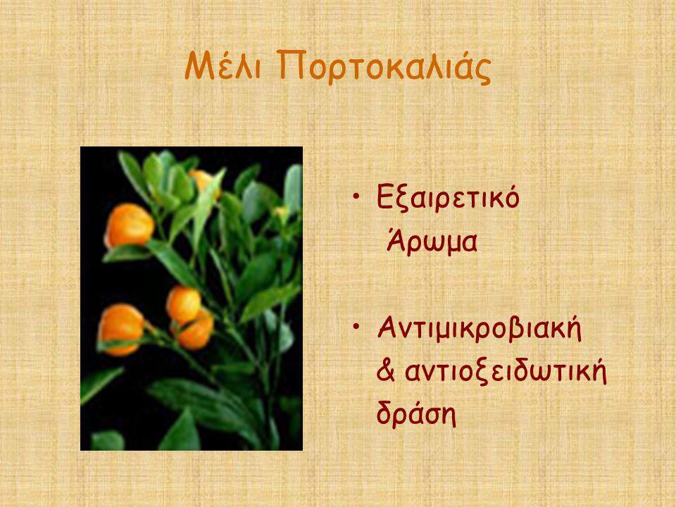 Μέλι Πορτοκαλιάς •Εξαιρετικό Άρωμα •Αντιμικροβιακή & αντιοξειδωτική δράση