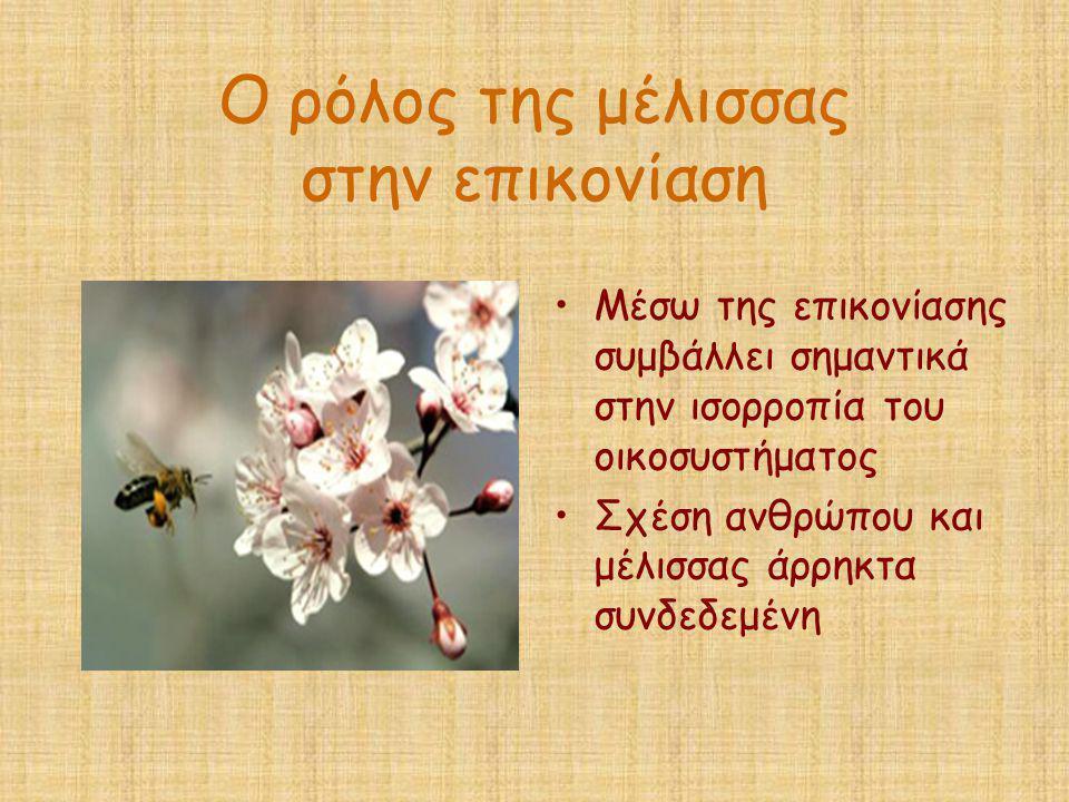 Ο ρόλος της μέλισσας στην επικονίαση •Μέσω της επικονίασης συμβάλλει σημαντικά στην ισορροπία του οικοσυστήματος •Σχέση ανθρώπου και μέλισσας άρρηκτα