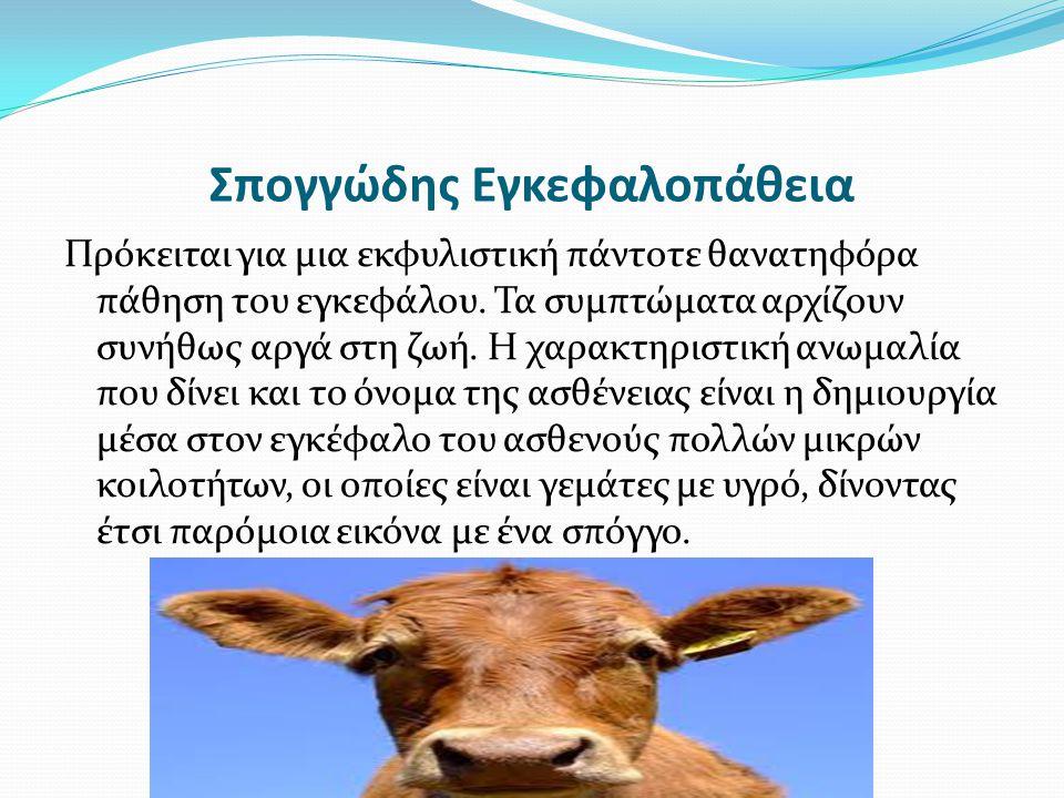 Μετάδοση Σπογγώδης εγκεφαλοπάθειας Μεταδόθηκε από τα πρόβατα στις αγελάδες λόγω του ότι δίνονταν στις αγελάδες τροφές που προέρχονταν από μολυσμένα πρόβατα, των οποίων τα πτώματα χρησιμοποιούνταν για την κατασκευή ζωοτροφών.