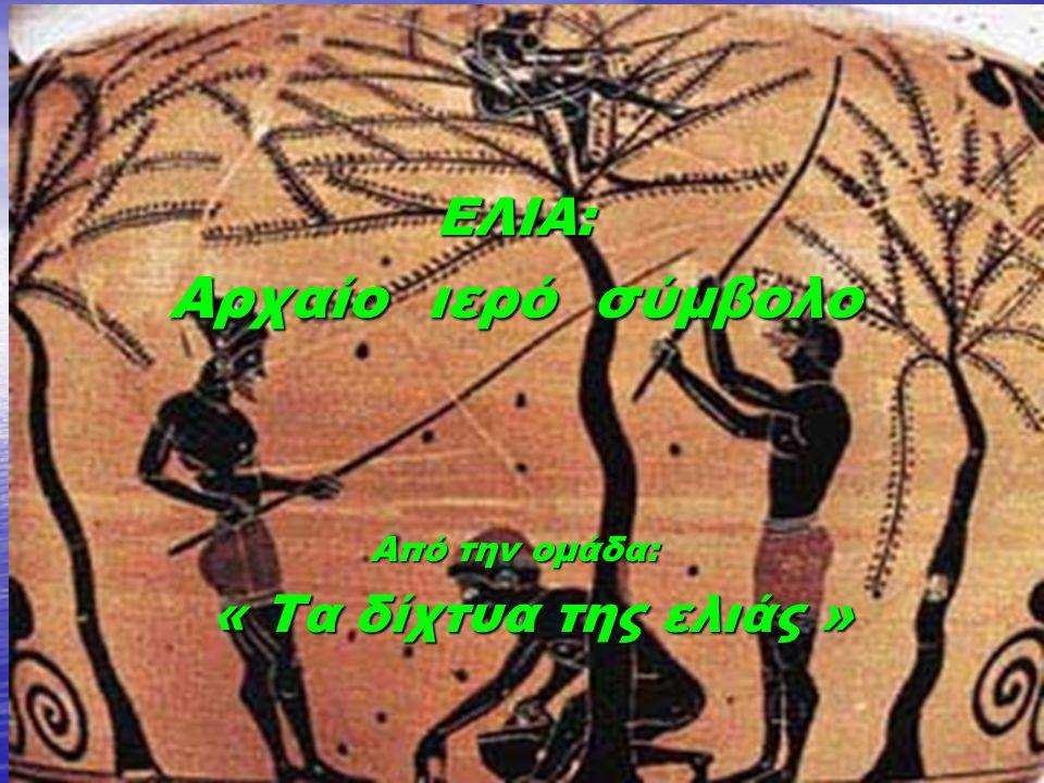 ΕΛΙΑ: Αρχαίο ιερό σύμβολο Από την ομάδα: « Τα δίχτυα της ελιάς » « Τα δίχτυα της ελιάς »