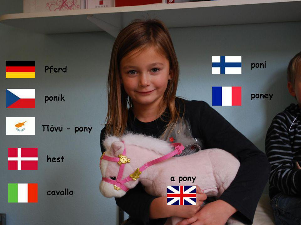 poni a pony ponik Pferd Πόνυ - pony hest poney cavallo