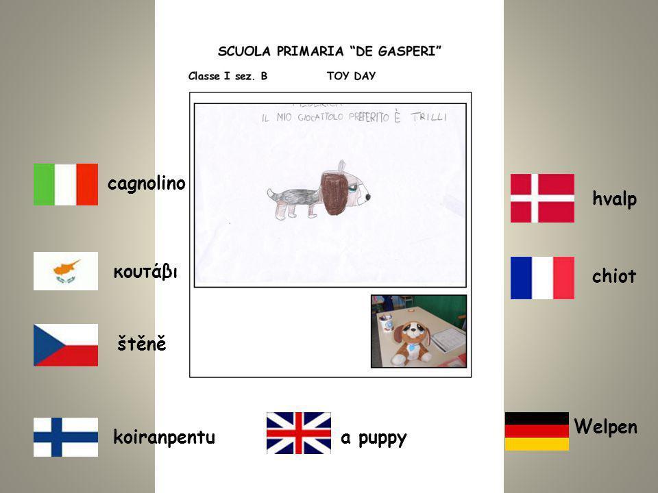 koiranpentua puppy cagnolino chiot Welpen κουτάβι štěně hvalp
