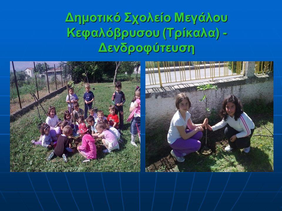 Δημοτικό Σχολείο Μεγάλου Κεφαλόβρυσου (Τρίκαλα) - Δενδροφύτευση