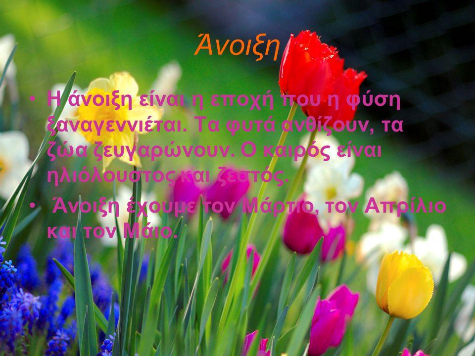 Άνοιξη •Η άνοιξη είναι η εποχή που η φύση ξαναγεννιέται. Τα φυτά ανθίζουν, τα ζώα ζευγαρώνουν. Ο καιρός είναι ηλιόλουστος και ζεστός. • Άνοιξη έχουμε