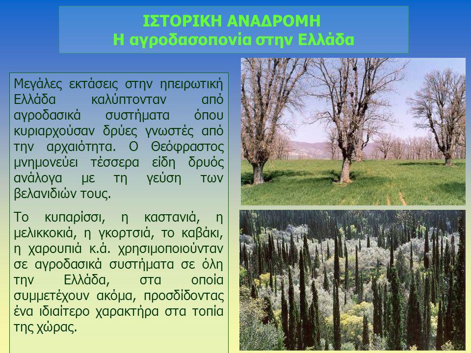 ΙΣΤΟΡΙΚΗ ΑΝΑΔΡΟΜΗ Η αγροδασοπονία στην Ελλάδα Μεγάλες εκτάσεις στην ηπειρωτική Ελλάδα καλύπτονταν από αγροδασικά συστήματα όπου κυριαρχούσαν δρύες γνω