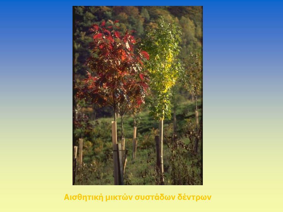 Αισθητική μικτών συστάδων δέντρων