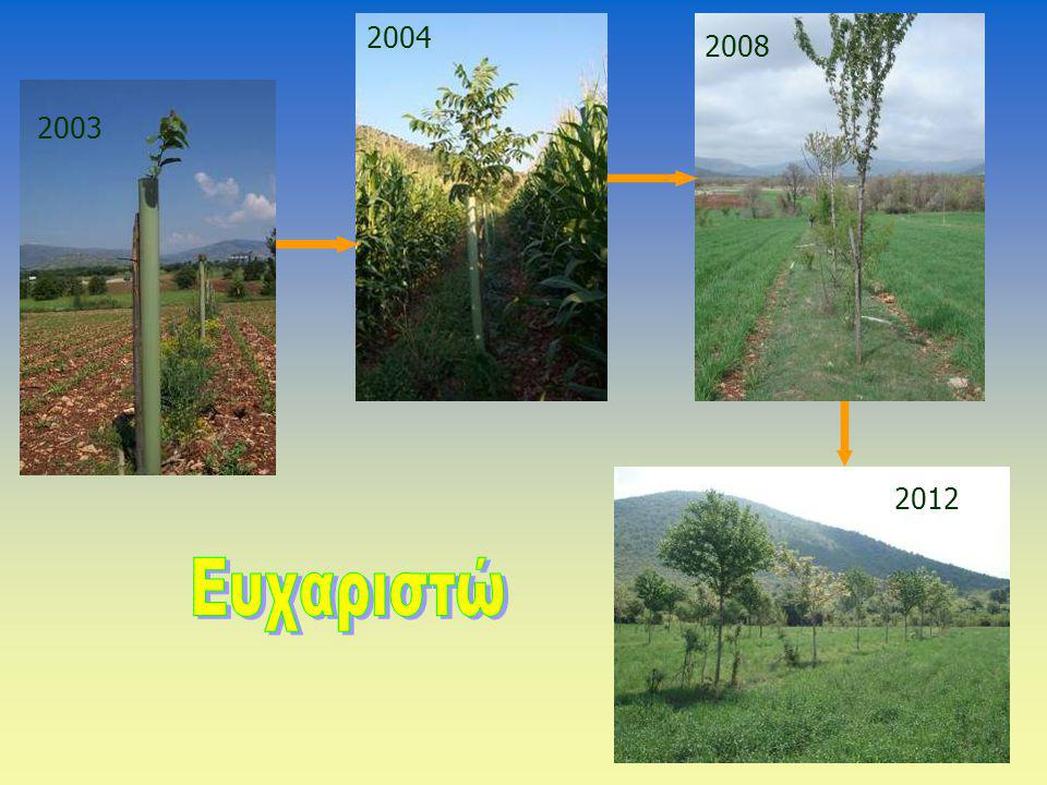 2003 2004 2008 2012