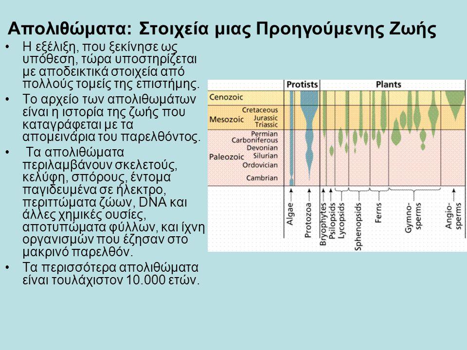 Απολιθώματα: Στοιχεία μιας Προηγούμενης Ζωής •Η εξέλιξη, που ξεκίνησε ως υπόθεση, τώρα υποστηρίζεται με αποδεικτικά στοιχεία από πολλούς τομείς της επ
