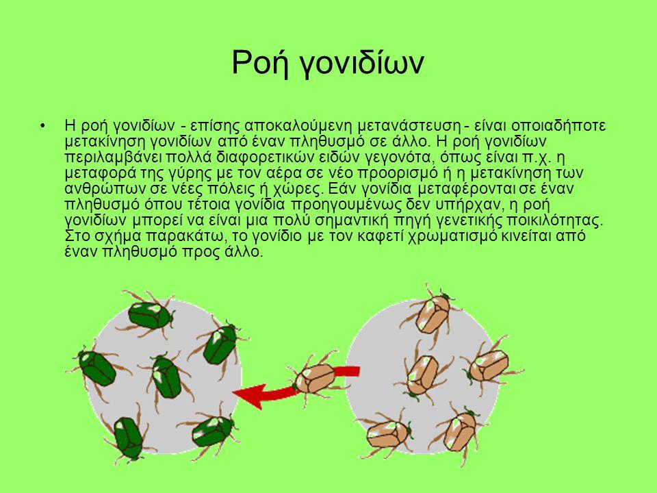 Ροή γονιδίων •Η ροή γονιδίων - επίσης αποκαλούμενη μετανάστευση - είναι οποιαδήποτε μετακίνηση γονιδίων από έναν πληθυσμό σε άλλο. Η ροή γονιδίων περι