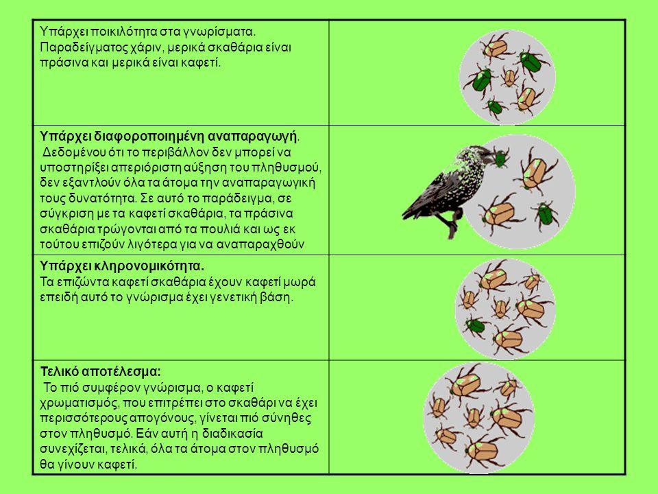 Υπάρχει ποικιλότητα στα γνωρίσματα. Παραδείγματος χάριν, μερικά σκαθάρια είναι πράσινα και μερικά είναι καφετί. Υπάρχει διαφοροποιημένη αναπαραγωγή. Δ