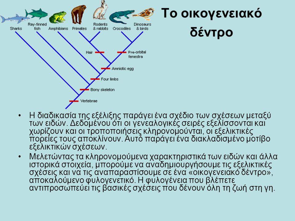 Το οικογενειακό δέντρο •Η διαδικασία της εξέλιξης παράγει ένα σχέδιο των σχέσεων μεταξύ των ειδών. Δεδομένου ότι οι γενεαλογικές σειρές εξελίσσονται κ