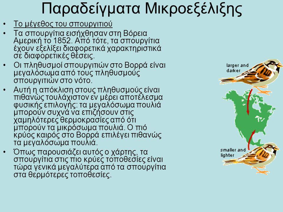 Παραδείγματα Μικροεξέλιξης •Το μέγεθος του σπουργιτιού •Τα σπουργίτια εισήχθησαν στη Βόρεια Αμερική το 1852. Από τότε, τα σπουργίτια έχουν εξελίξει δι