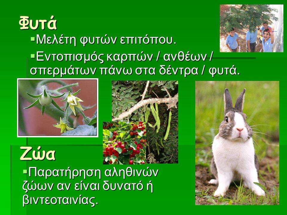 Φυτά  Μελέτη φυτών επιτόπου.  Εντοπισμός καρπών / ανθέων / σπερμάτων πάνω στα δέντρα / φυτά. Ζώα  Παρατήρηση αληθινών ζώων αν είναι δυνατό ή βιντεο