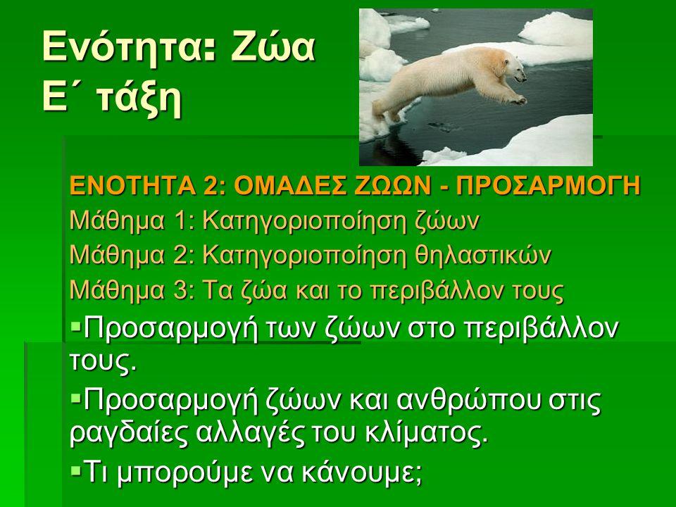 Ενότητα : Ζώα Ε΄ τάξη EΝΟΤΗΤΑ 2: ΟΜΑΔΕΣ ΖΩΩΝ - ΠΡΟΣΑΡΜΟΓΗ Μάθημα 1: Κατηγοριοποίηση ζώων Μάθημα 2: Κατηγοριοποίηση θηλαστικών Μάθημα 3: Τα ζώα και το