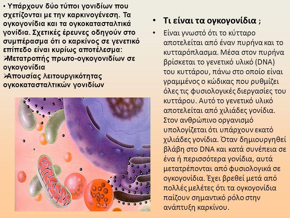 • Τι είναι τα ογκογονίδια ; • Είναι γνωστό ότι το κύτταρο αποτελείται από έναν πυρήνα και το κυτταρόπλασμα. Μέσα στον πυρήνα βρίσκεται το γενετικό υλι