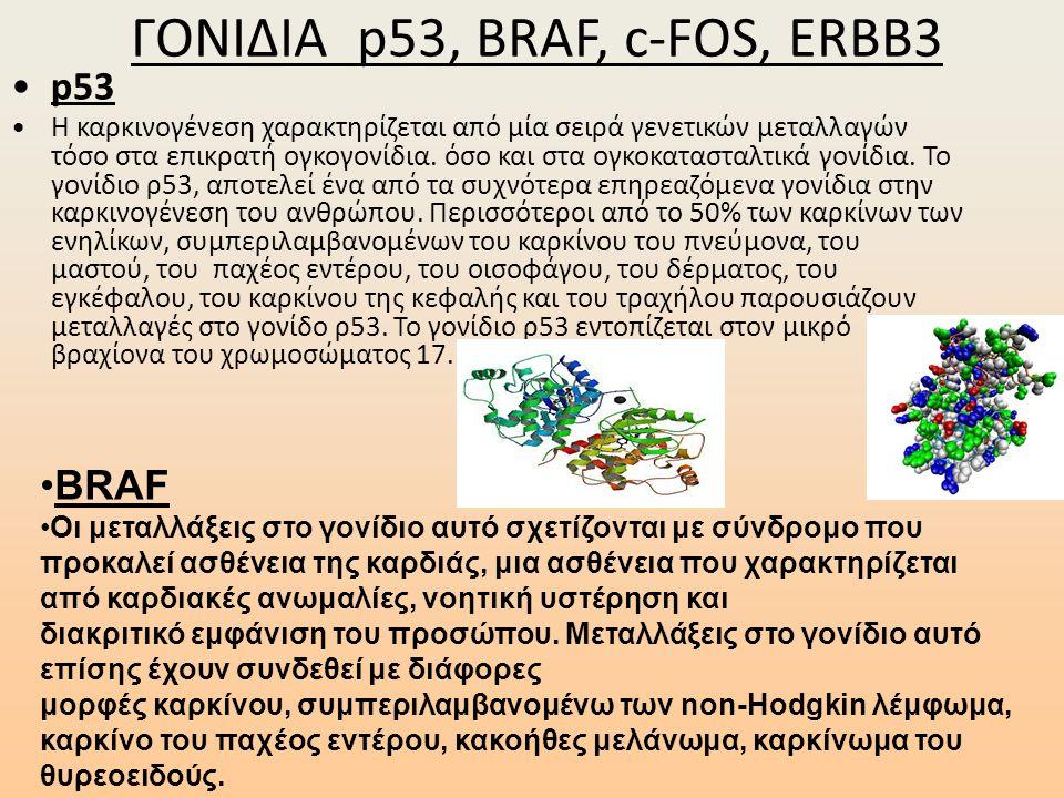 ΓΟΝΙΔΙΑ p53, BRAF, c-FOS, ERBB3 •p53 •Η καρκινογένεση χαρακτηρίζεται από μία σειρά γενετικών μεταλλαγών τόσο στα επικρατή ογκογονίδια. όσο και στα ογκ