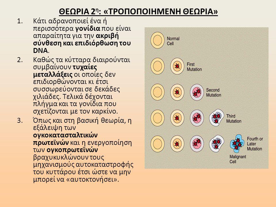 ΘΕΩΡΙΑ 2 η : «ΤΡΟΠΟΠΟΙΗΜΕΝΗ ΘΕΩΡΙΑ» 1.Κάτι αδρανοποιεί ένα ή περισσότερα γονίδια που είναι απαραίτητα για την ακριβή σύνθεση και επιδιόρθωση του DNA.