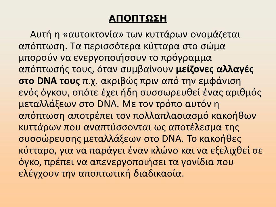 ΑΠΟΠΤΩΣΗ Αυτή η «αυτοκτονία» των κυττάρων ονομάζεται απόπτωση. Τα περισσότερα κύτταρα στο σώμα μπορούν να ενεργοποιήσουν το πρόγραμμα απόπτωσής τους,