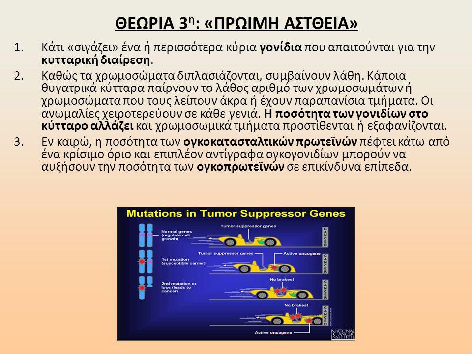 ΘΕΩΡΙΑ 3 η : «ΠΡΩΙΜΗ ΑΣΤΘΕΙΑ» 1.Κάτι «σιγάζει» ένα ή περισσότερα κύρια γονίδια που απαιτούνται για την κυτταρική διαίρεση. 2.Καθώς τα χρωμοσώματα διπλ