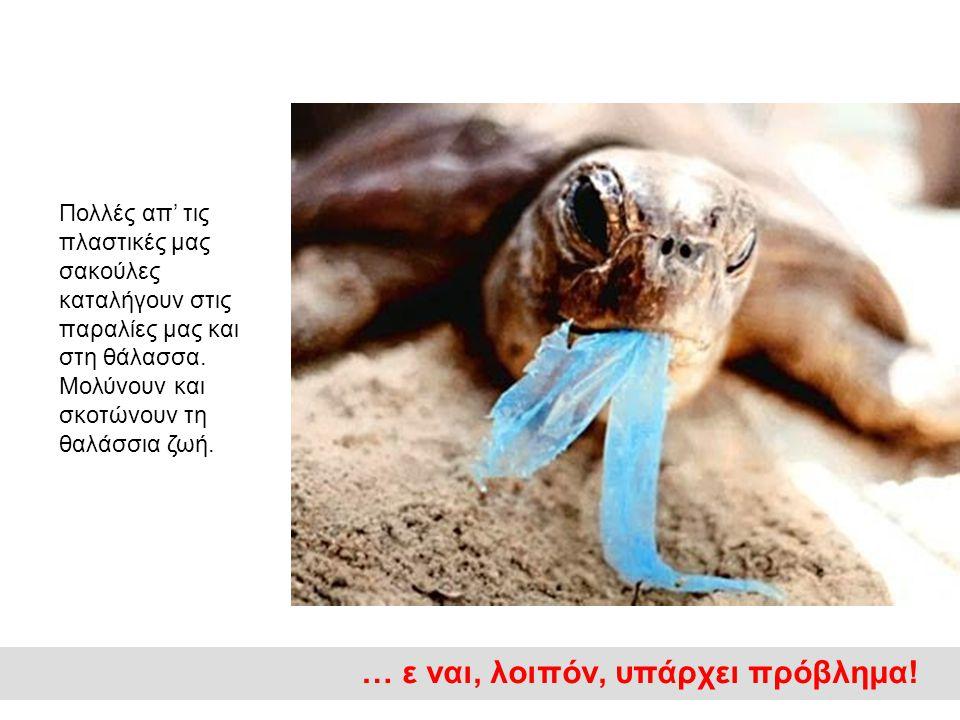 Πολλές απ' τις πλαστικές μας σακούλες καταλήγουν στις παραλίες μας και στη θάλασσα.
