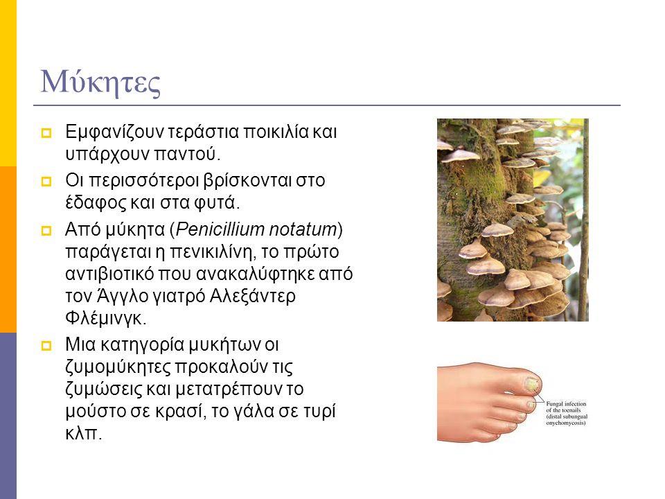 Μύκητες  Εμφανίζουν τεράστια ποικιλία και υπάρχουν παντού.