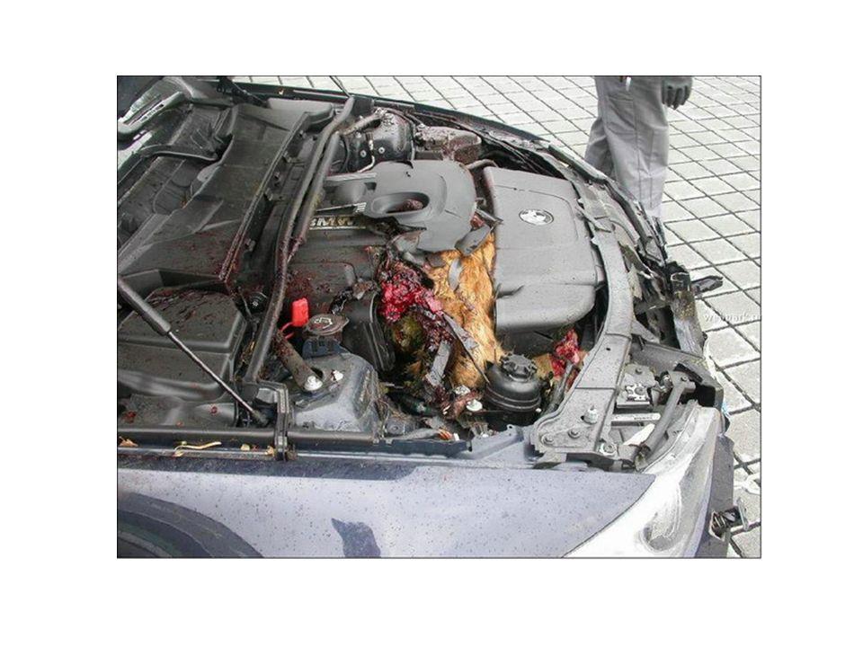 Τα ιαπωνικά θεωρούνται τα πρώτα σε τεχνολογία άρα ένα Honda θα έπρεπε να είναι ασφαλές…