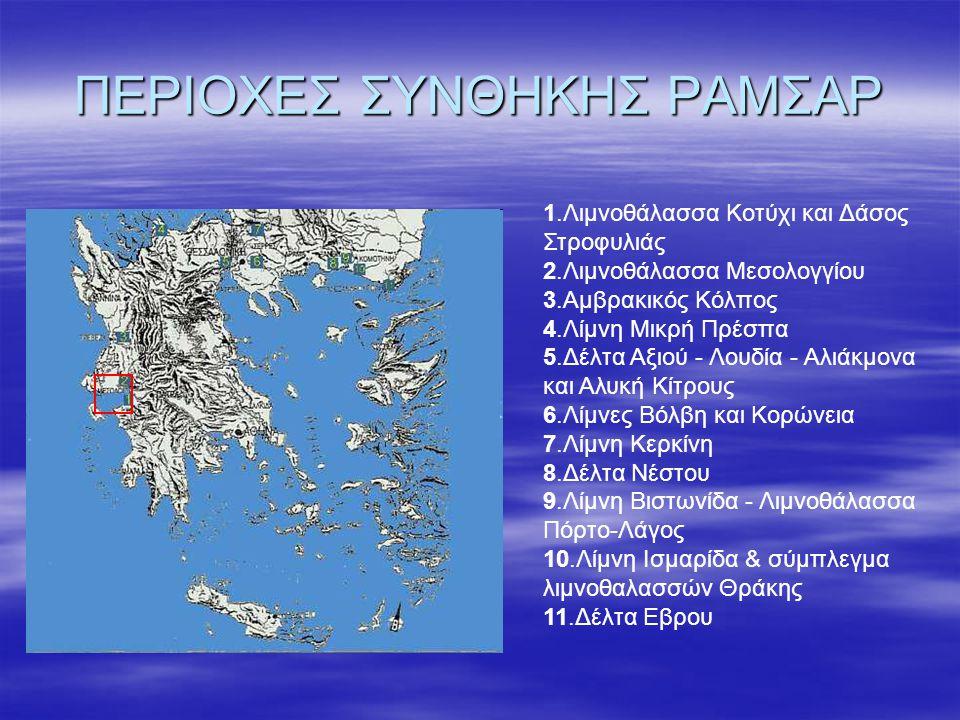 ΠΕΡΙΟΧΕΣ ΣΥΝΘΗΚΗΣ ΡΑΜΣΑΡ 1.Λιμνοθάλασσα Κοτύχι και Δάσος Στροφυλιάς 2.Λιμνοθάλασσα Μεσολογγίου 3.Αμβρακικός Κόλπος 4.Λίμνη Μικρή Πρέσπα 5.Δέλτα Αξιού