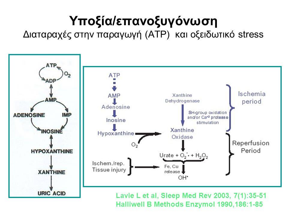 Υποξία/επανοξυγόνωση Διαταραχές στην παραγωγή (ATP) και οξειδωτικό stress Lavie L et al, Sleep Med Rev 2003, 7(1):35-51 Halliwell B Methods Enzymol 19