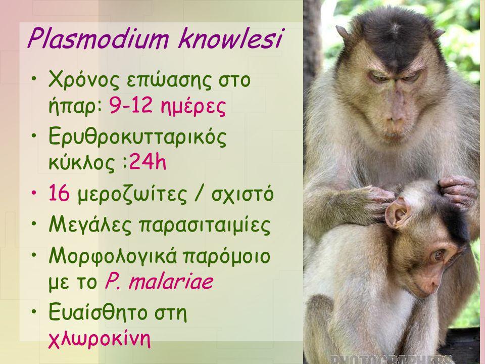 Plasmodium knowlesi •Χρόνος επώασης στο ήπαρ: 9-12 ημέρες •Ερυθροκυτταρικός κύκλος :24h •16 μεροζωίτες / σχιστό •Μεγάλες παρασιταιμίες •Μορφολογικά πα