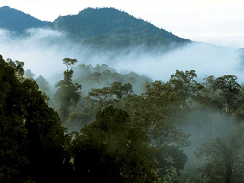 Ταξιδιωτικό ιστορικό •Διακοπές για 2 εβδομάδες στη Sarawak, Βόρνεο •τη δεύτερη εβδομάδα της παραμονής του περιφερόταν στη ζούγκλα των υψιπέδων Bario,